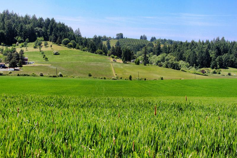 Yamhill Rural