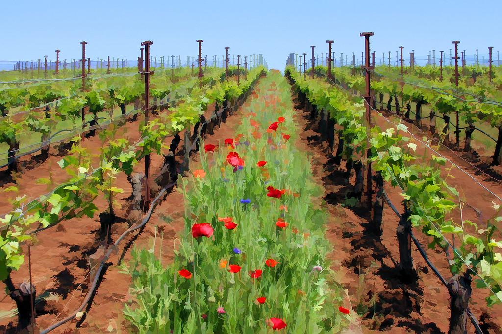 Painted Vineyards