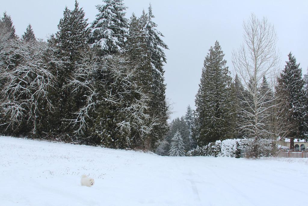 Snow-Ice Winter Wonderland