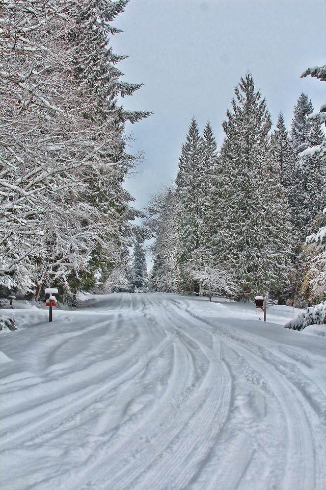 Snowy Road 2014