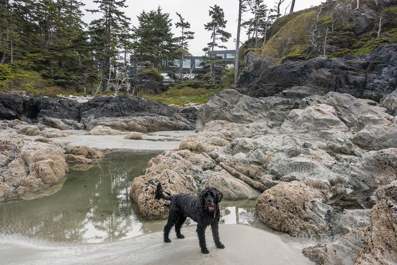 Low-tide-with-Portuguese-Water-Dog,-Chesterman-Beach,-Tofino,-British-Columbia