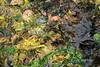 Smorgesborg of seaweeds