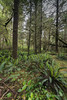 Rainforest-with-ferns-and-mosses,-Pacific-Rim-National-Park,-Tofino,-British-Columbia