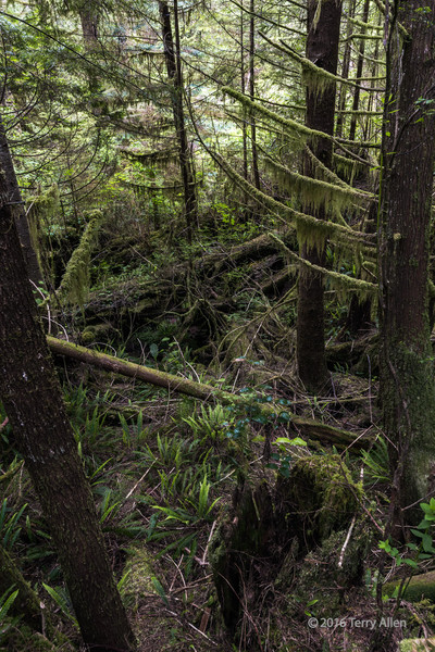 The-untamed-forest,-Rainforest-Trail-B,-Pacifc-Rim-National-Park,-Tofino,-British-Columbia