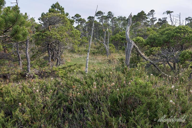 Pacific Northwest bog ecosystem