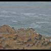 Gulls On The Edge