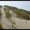 Foredune and European Beachgrass