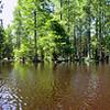 Julie on Trap Pond