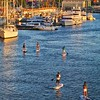Paddle Board inner Harbour