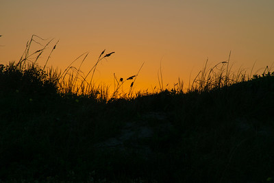 Dune Grasses at Sunset