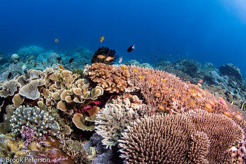 Hard Coral Reef