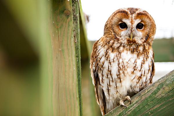 Resident Owl at the Riverside Animal Centre