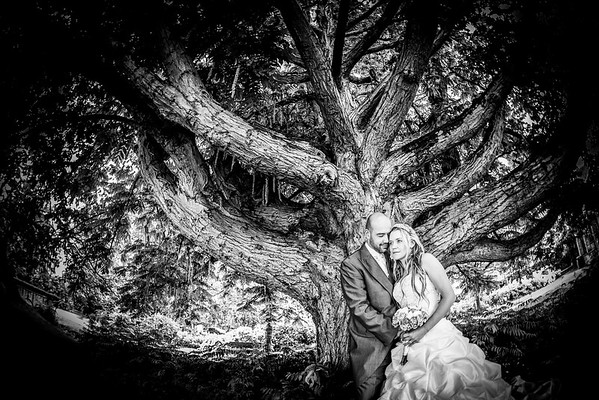 Bride and groom portrait by old textured tree
