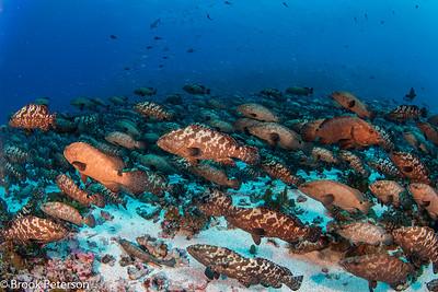 Carpet of Fish