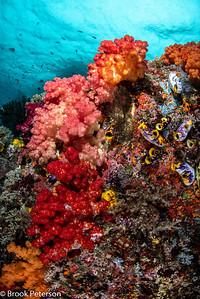 Soft Coral Ridge