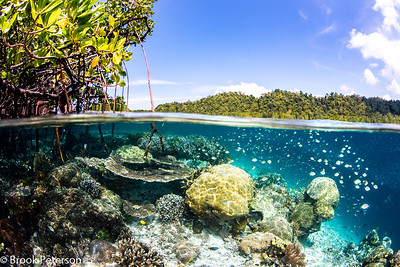 Mangrove Split
