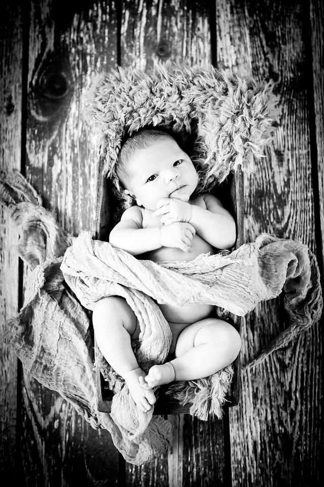 Newborn Baby Studio Portrait
