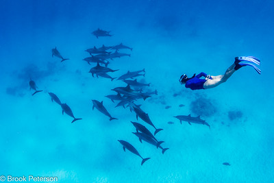 Diver and Spinner Dolphins