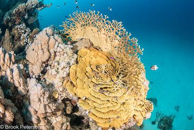 Coral Spiral