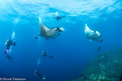Mantas and Divers