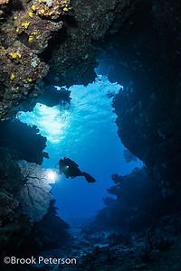Diver Filming a Fan