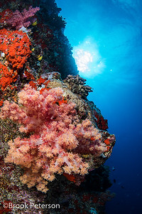 Coral and Sun