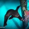 Sea Lion and Baitfish