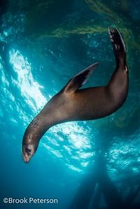 Sea Lion 5005