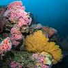Reef Scene So Cal