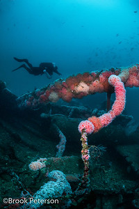 Diver on Olympic Wreck