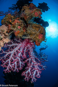 Coral Encrusted Mast