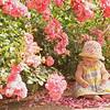 Portland Rose Garden, Portland Oregon