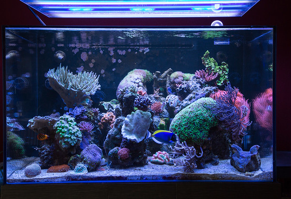 ATI Aquarium Lighting Shoot