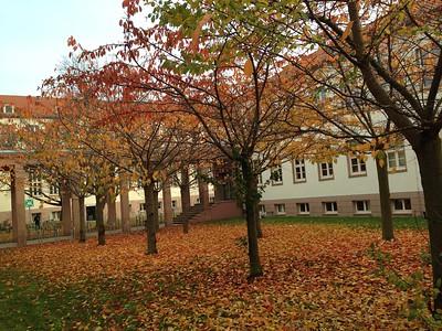 Herbstimpression am Weinberg Campus