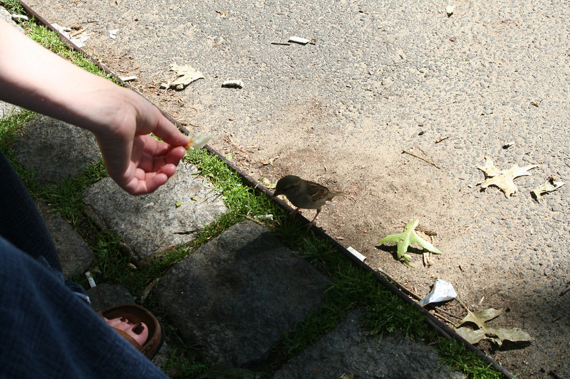 """As we sat in this little park outside Peet's coffee, Lesley dropped a crumb from her """"breakfast"""" and a flock of sparrows appeared."""