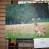 "Here is work done titled, ""Deer"" by Jessica Herboth, a senior at Effingham High School. Photo by Dawn Schabbing"