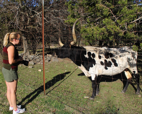 Photographing Long Horns in Wimberley, Texas
