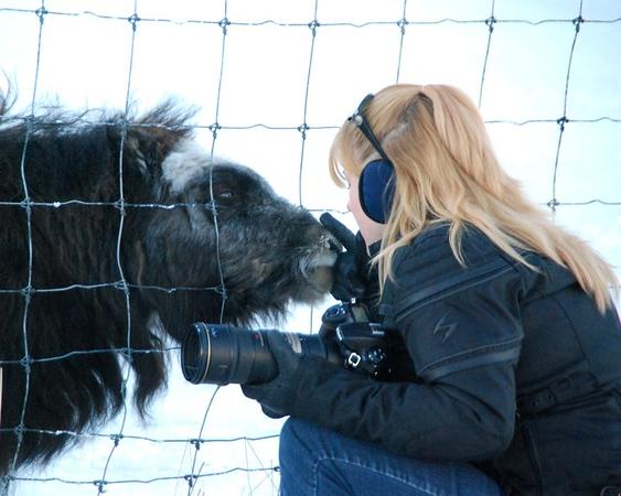 Petting the baby Musk Ox, Portage, Alaska