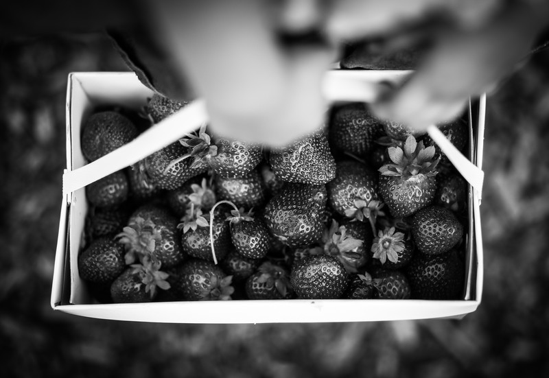 Visio Sonis: Strawberry Fields Forever | Fort Collins, Colorado Fine Art Photographer