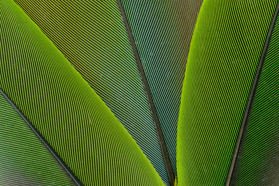 Parrot Feather Pattern: Green