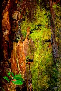 Dead_Tree_New_Growth_1_DDK0763