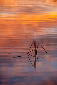 Pond_Reeds_Sunset_V_DSC0028