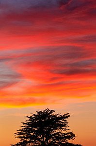 Sunset_Tree_Vertical_DAK4528