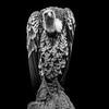 Ruppell's Griffon Vulture 1