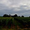 Vineyards of Saint-Emilion, Aquitane, France
