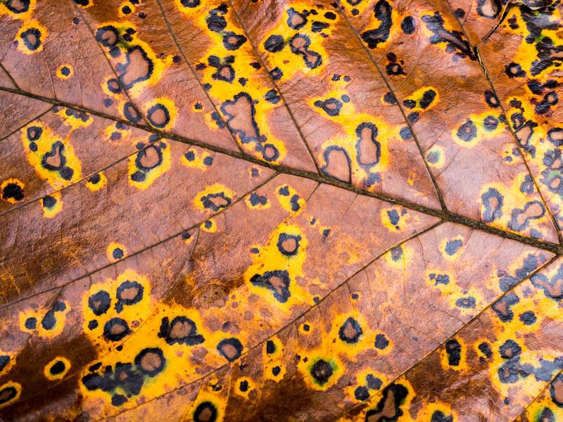 Dried leaf texture
