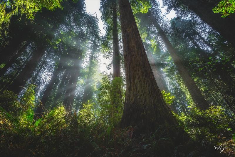 Light of the Woods (2015)