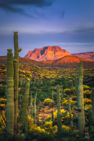 Sonoran Throne