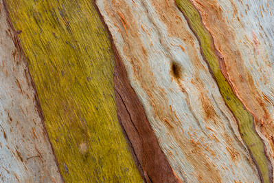 Eucalyptus Bark Abstract Pattern #1