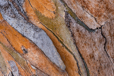 Eucalyptus Bark Abstract Pattern #2